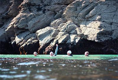 sea swimmers