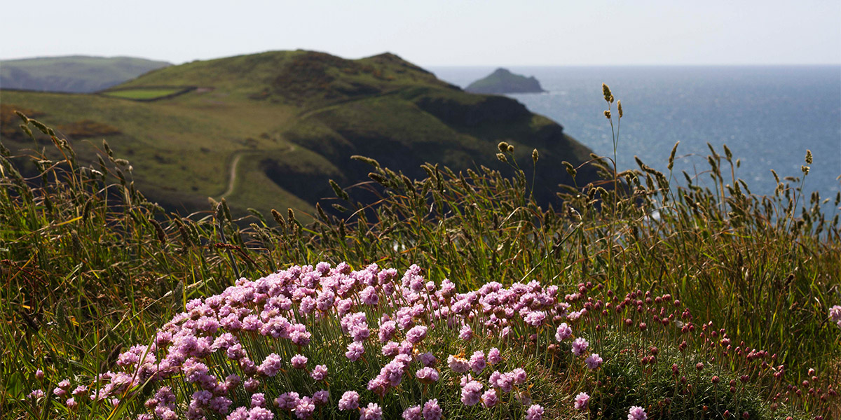 A Guide to Cornish Coastal Wildflowers