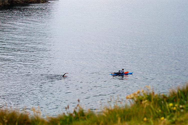 guided open water swimming at port gaverne