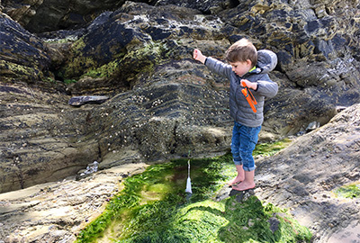 rockpooling in Cornwall
